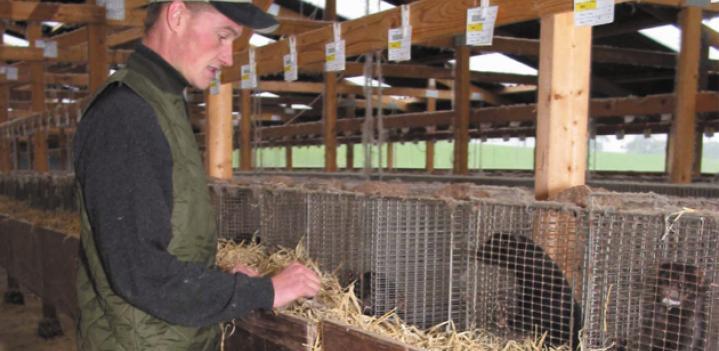 Mark Oaten on Skinning Animals Alive