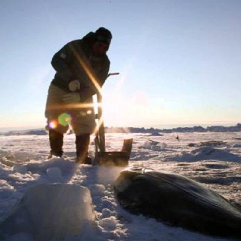 Inuit Christmas, Mark Oaten