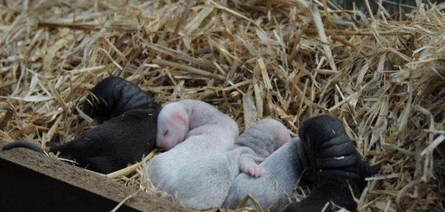 Baby Mink Fur Farming