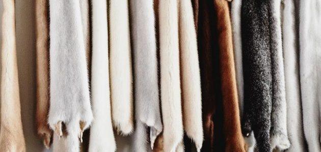 fur pelts, Mark Oaten,