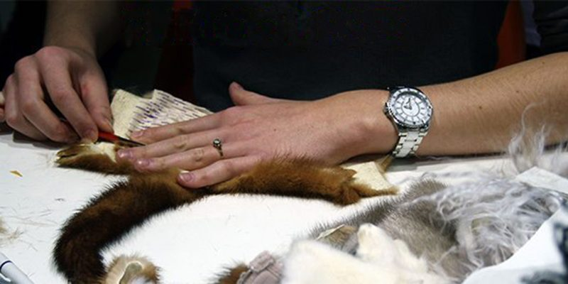 Fur Futures Blog, We Are Fur