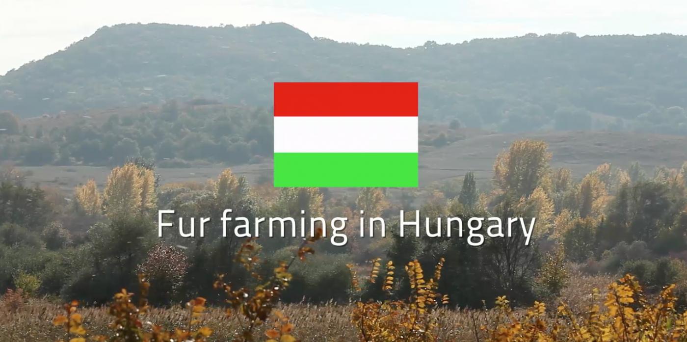 János Fülöp Fur Farmer in Hungary