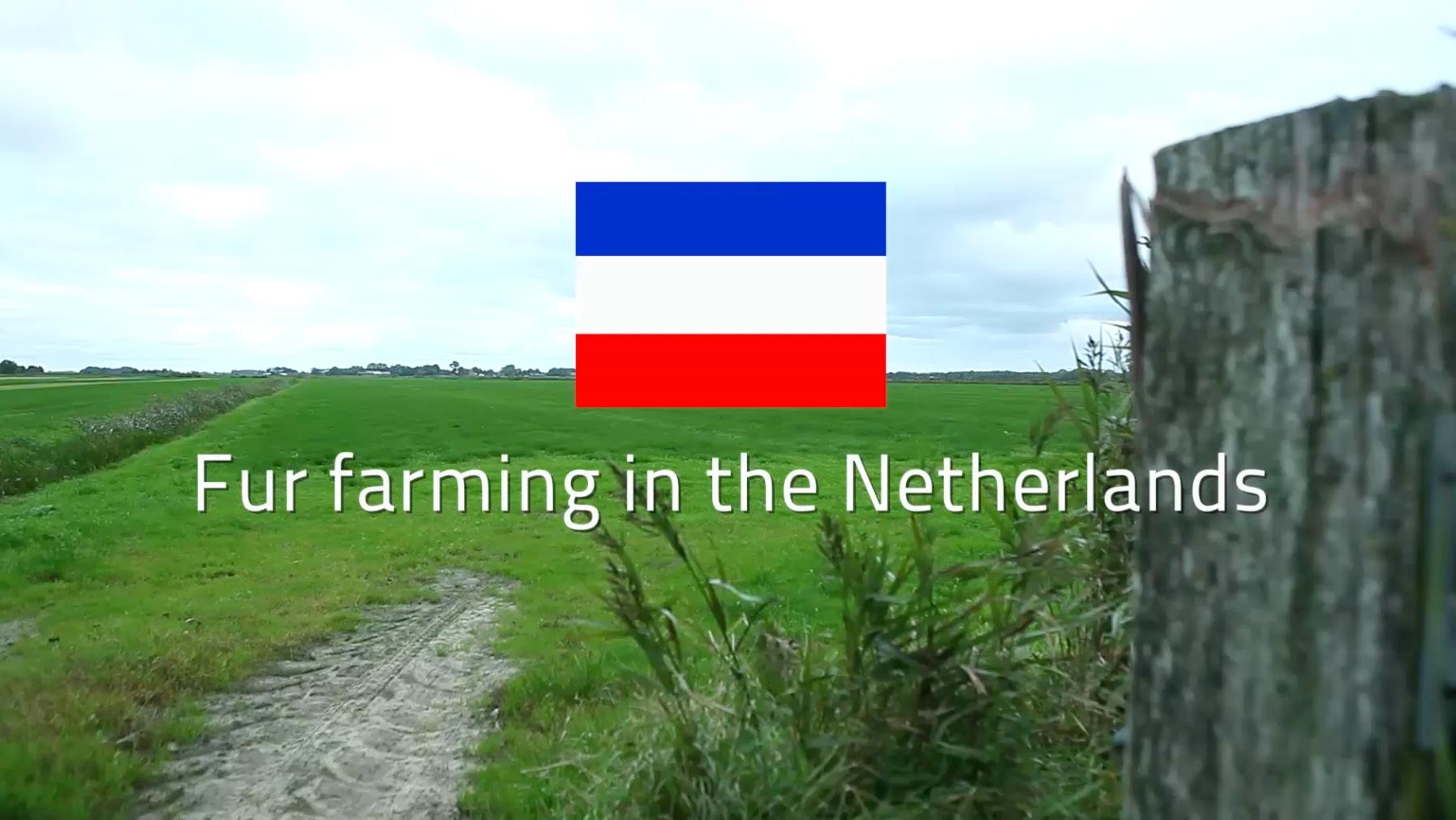 Pauline Blanken, Fur Farming in the Netherlands