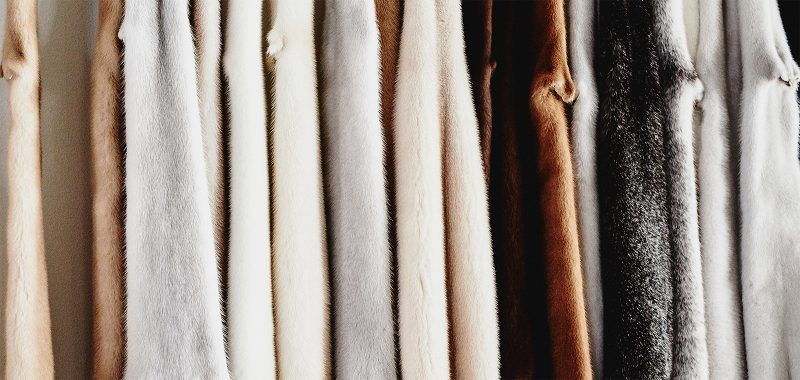Regional Fur News