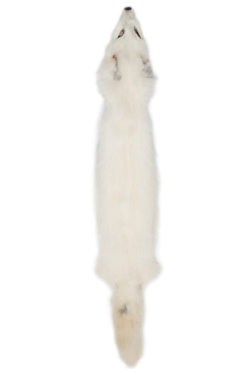 <strong></strong> Farmed Fur, NAFA